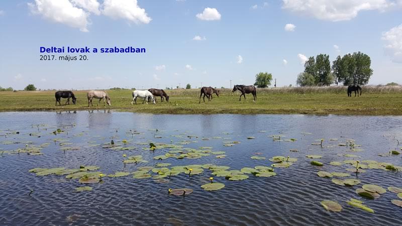 Lovak Deltaban