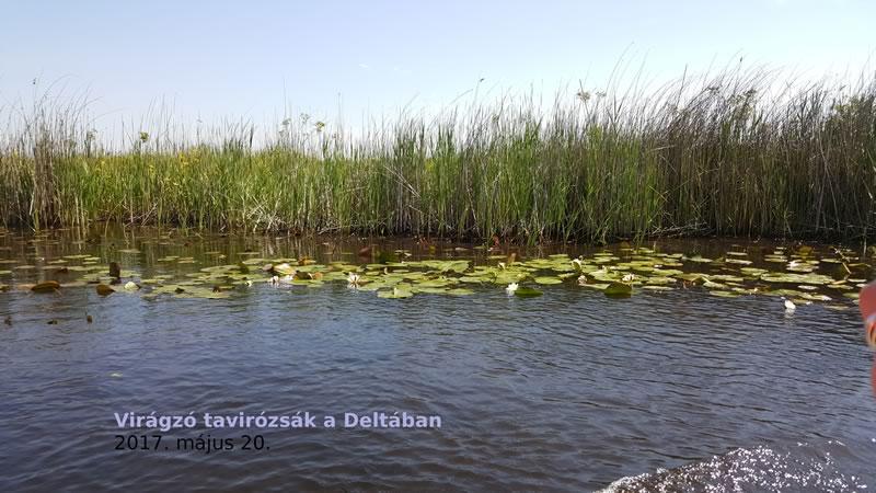 tavirozsak Deltaban